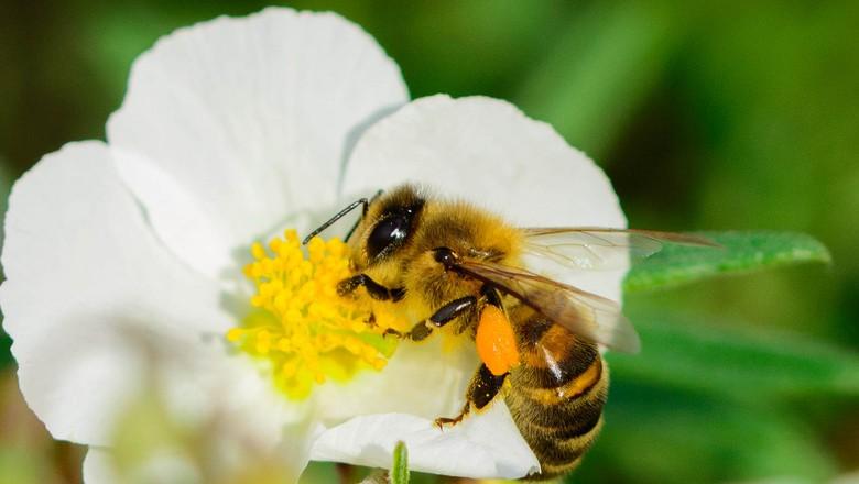 Picada de abelha em bebê o que fazer - Picada de abelha em bebê, o que fazer?